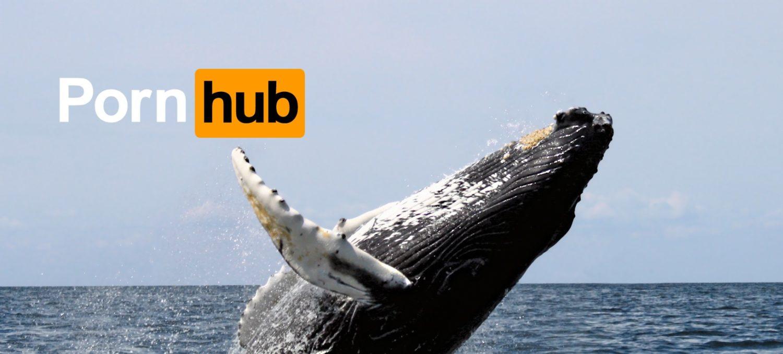 pornhub wspiera walenie marka i marketing